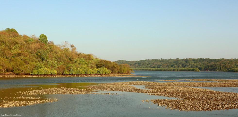 7.31 Veerwadi creek waters