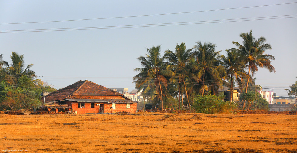 Rural house next to Coconut trees.
