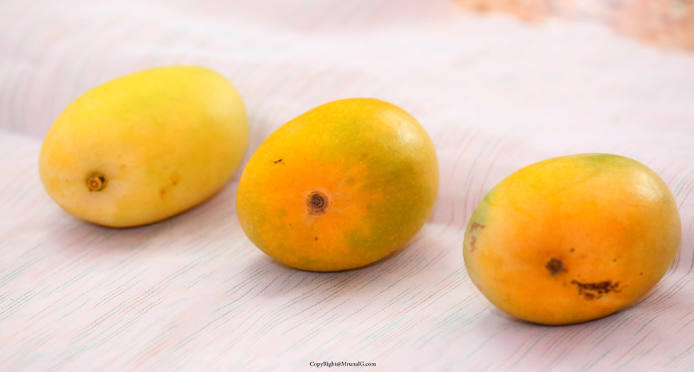 The ripe mangoes ...From left to right Keshar, Alphonso (Hapus), Ratna