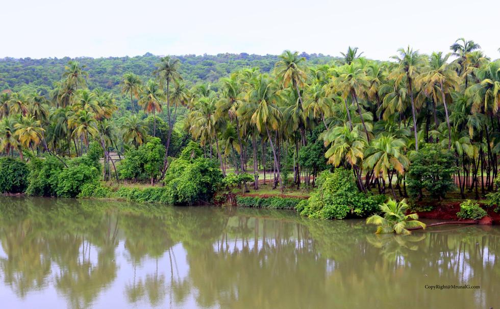 7.20 Tembvali river coconut plantation