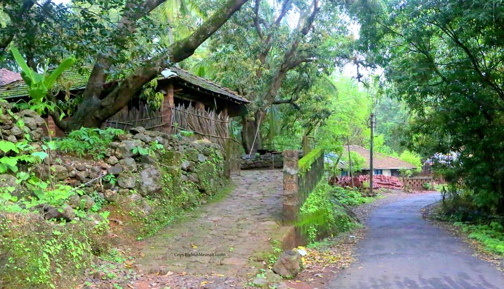Rural houses by road.