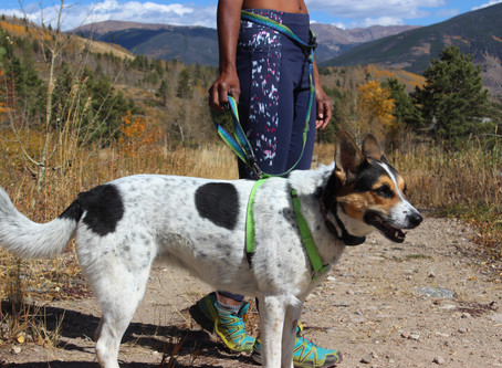 Trail Running with Dogs for Beginners