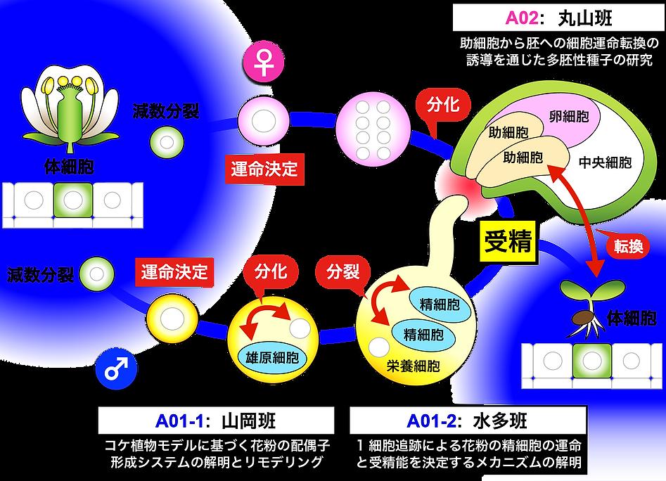 領域図_ver5_アートボード 1.png