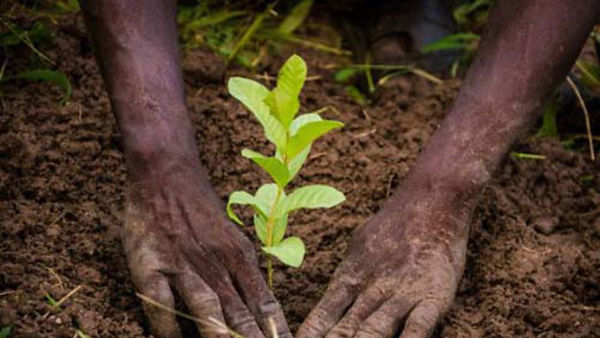 Reforest'Pona Mboka