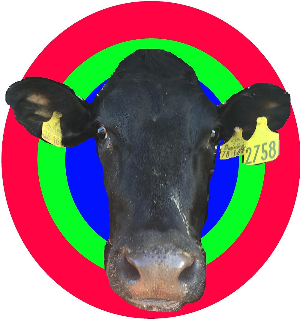Gordano the cow.jpg