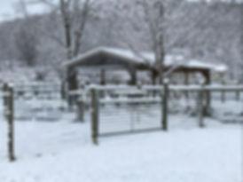 Alpaca Farm Winter 3.jpg