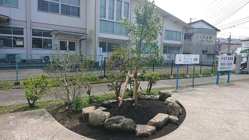 タラヨウの木=葉書の木