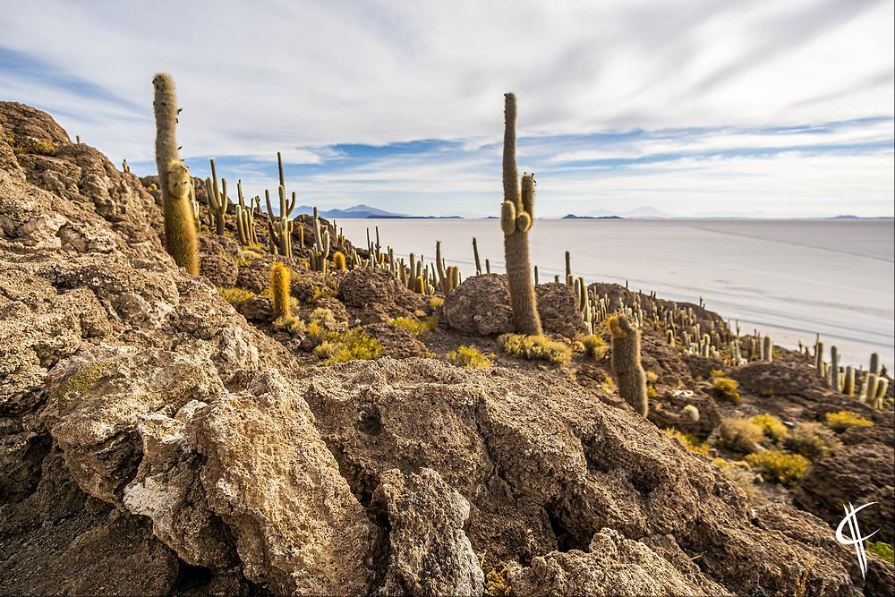Big Cacti, Isla del Pescado