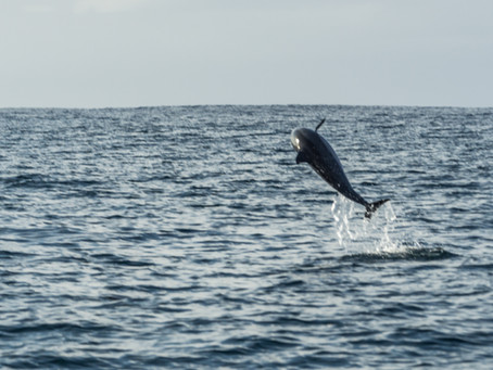 #PeCasAdventures 5: Dolphins!