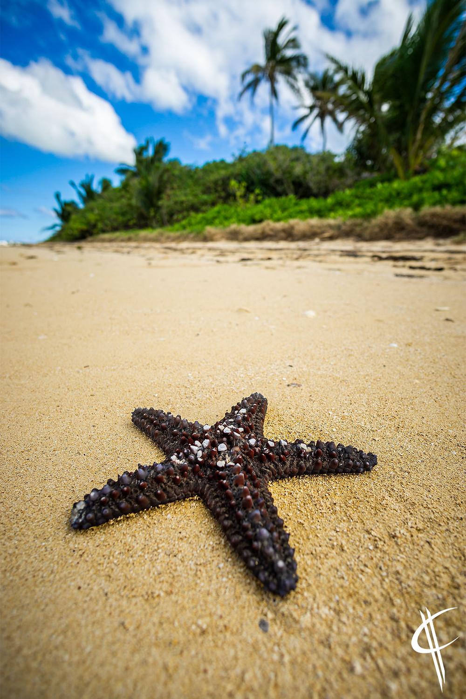 A star on the beach