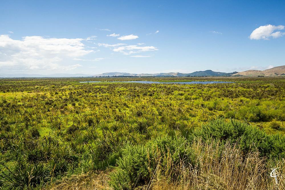 Sinclair Wetlands