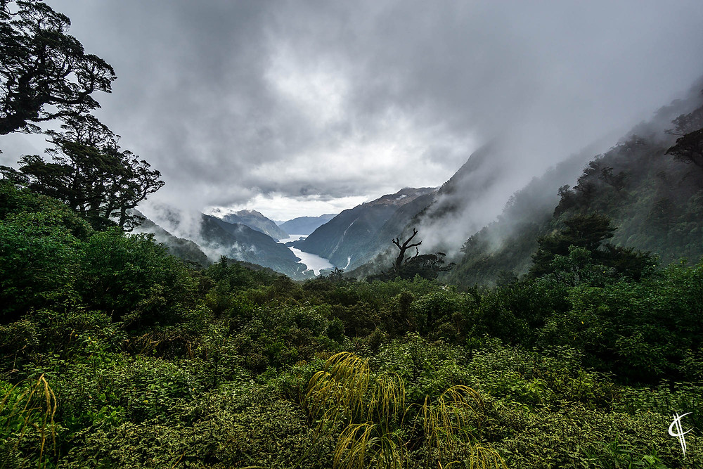 Misty view over the Doubtful Sound