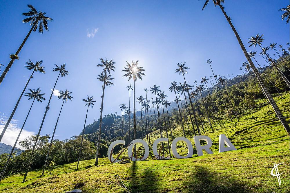 Cocora Valley: Palmas de Cera