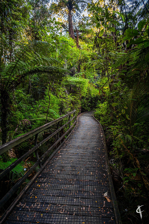 Puketi Forest