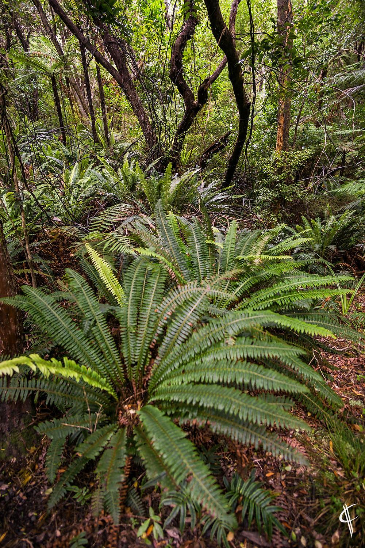 Ferns in the bush