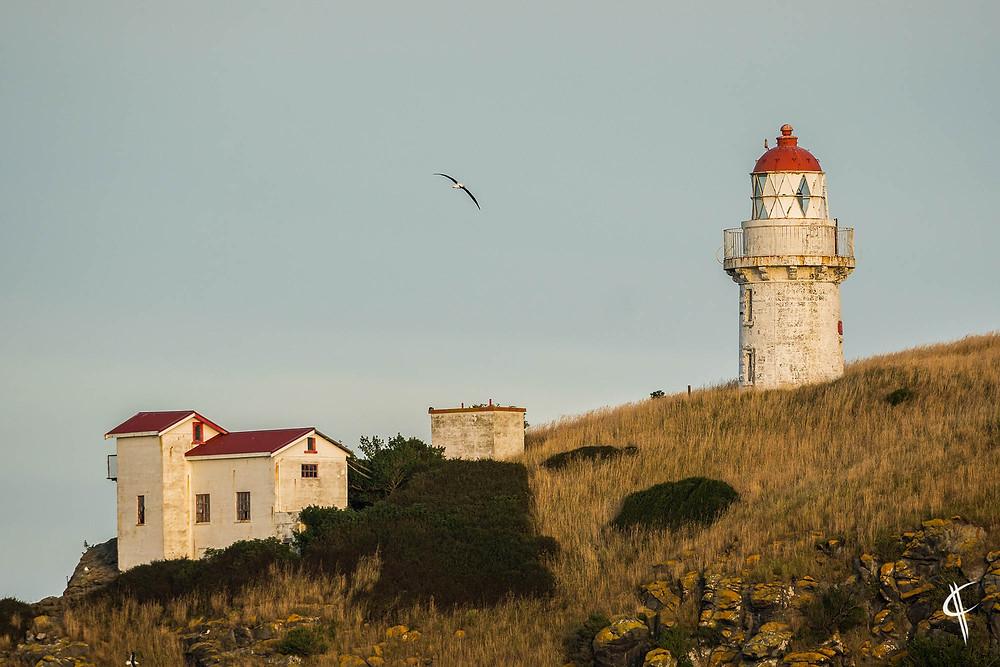 Albatros over the lighthouse