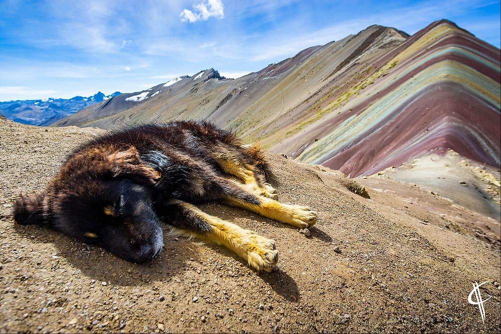Sleeping dog, Rainbow Mountain