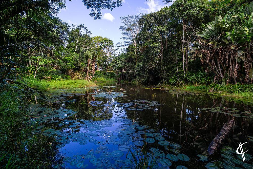 Lotuspond @ Eco Lodge Colo-I -Suva