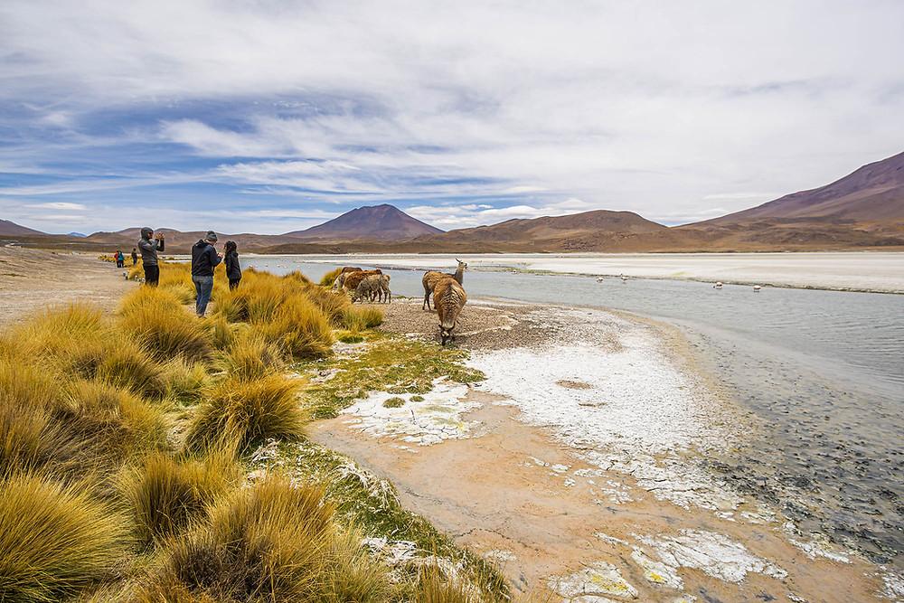 Die Gruppe fotografiert Lamas an der Laguna Hedionda