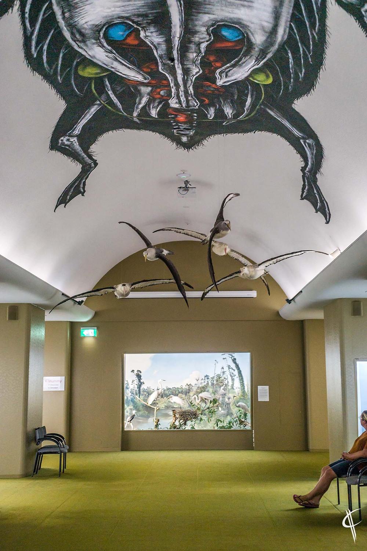 Bird Hall @ Canterbury Museum