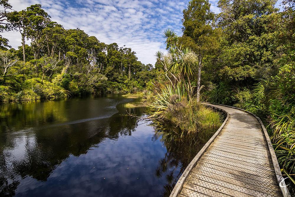 Shipcreek wet forest