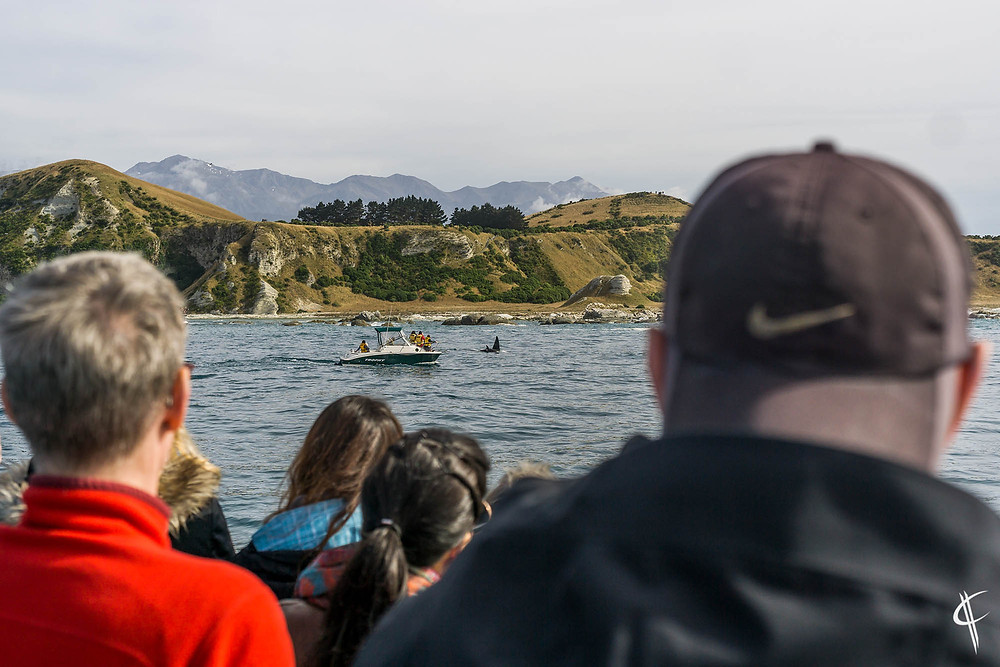 The crowd watching Orcas