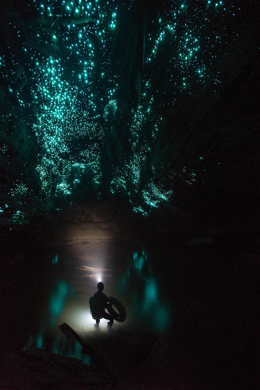Waitomo Glowworms (Photo by Simon/BWRafting)