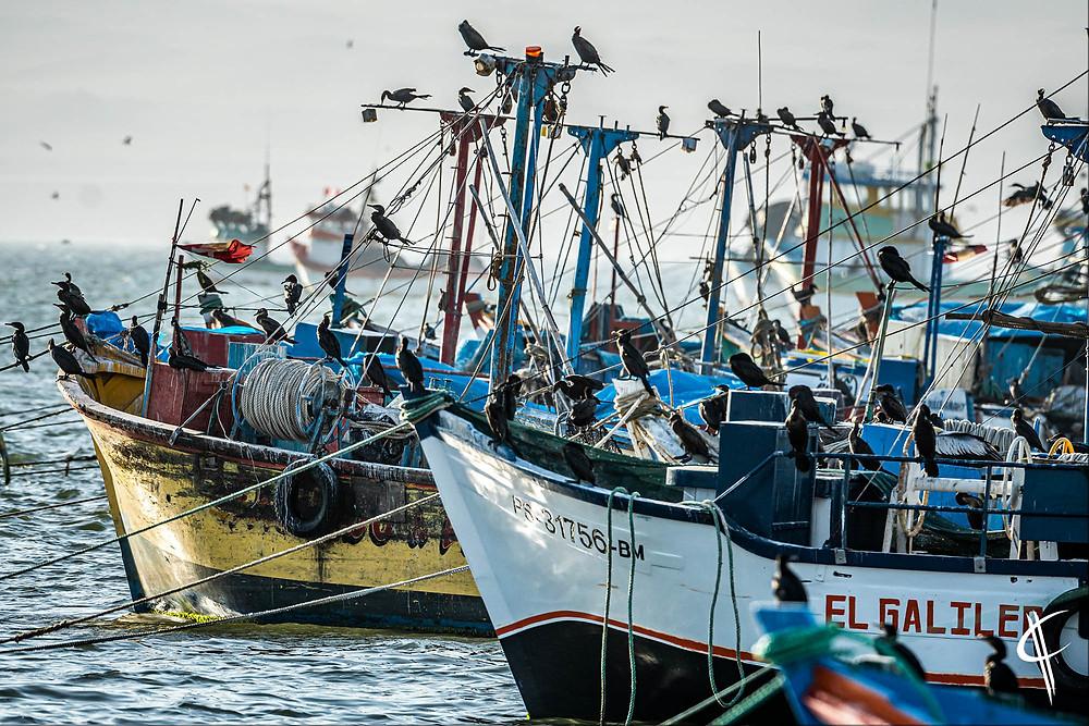 Birds & Boats, Paracas