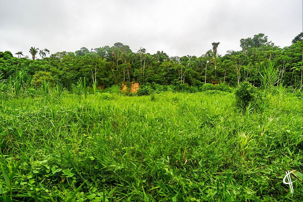 Clay lick, Tambopata