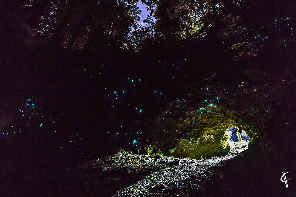 Glowworm Dell, Hokitika