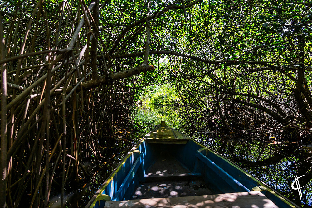 Mangroves in Monterrico