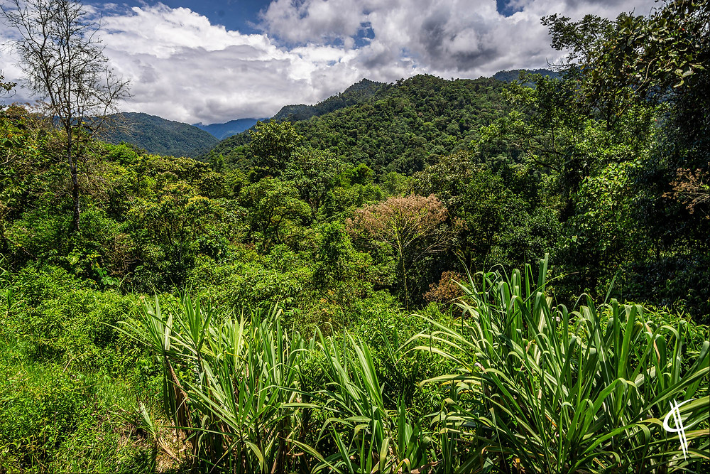 Mindo Forest