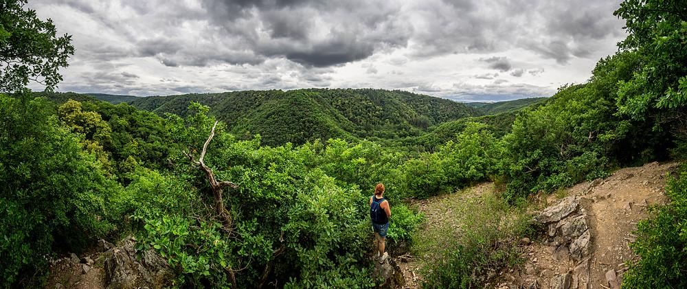 Blick über den Schluchtenwald