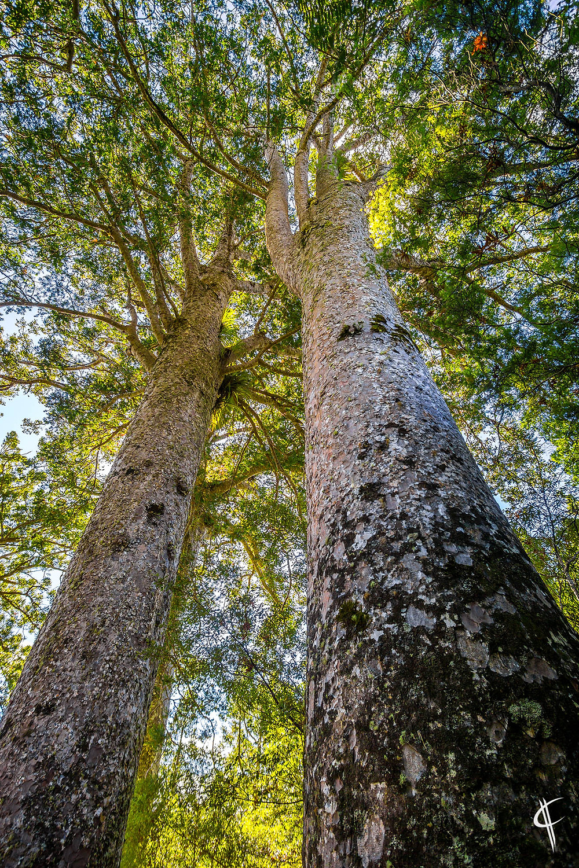 Waiau/309 Kauri Grove
