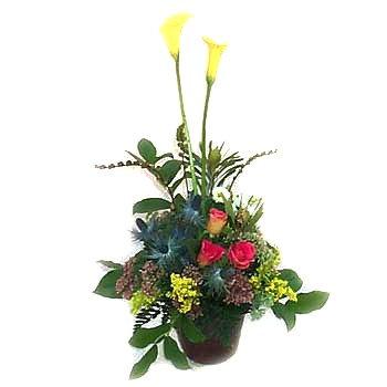 Cut-flower Arrangement