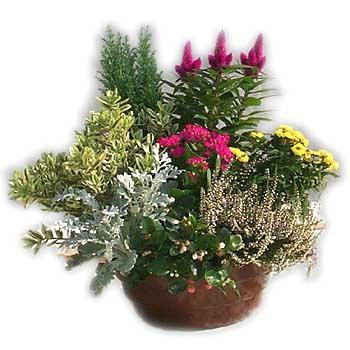 Funeral Plant Arrangement