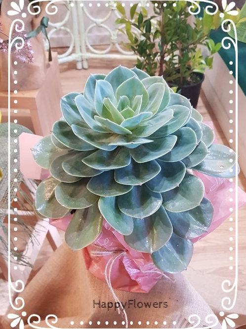 Succulent plant #82