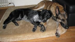 7.Was darf mein Hund zu Hause? – zu Hause ist Pause