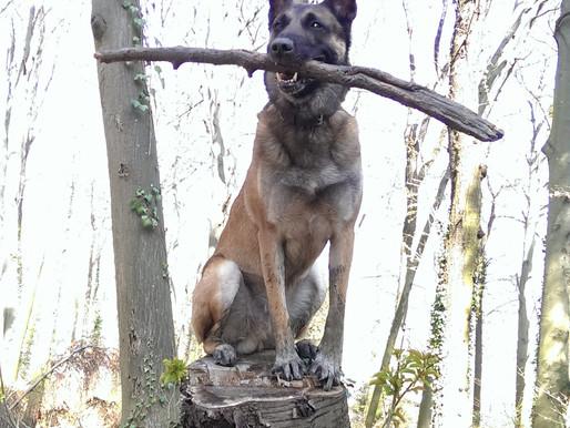 4. Welcher Hundetyp passt in meine Familie?