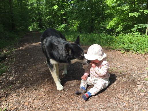 8.Was darf mein Hund auf dem Spaziergang?