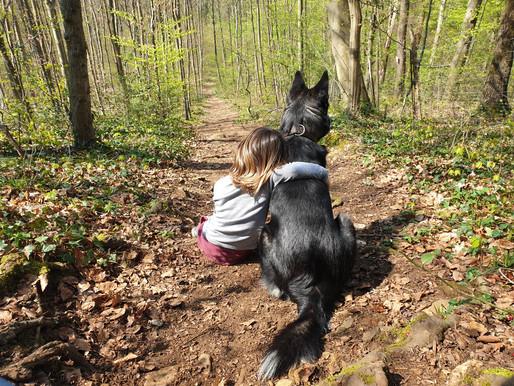 """1. Teil - """"Der zuverlässige Familienhund"""""""