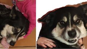 2. Pro und Contra eines Familienhundes