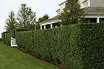 Lawn Mowing, Gardener