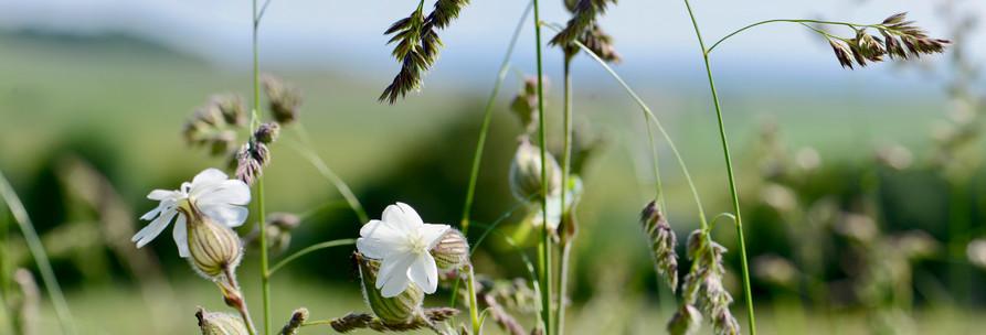 Fleurs sauvages au fil des saisons