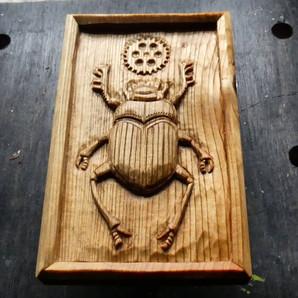 Scarab Family Beetle