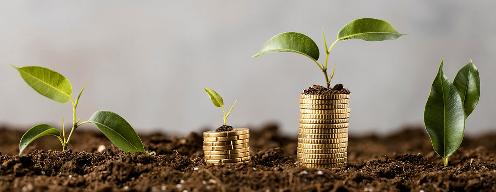 plants-with-coins-stacked-on-dirt.jpg