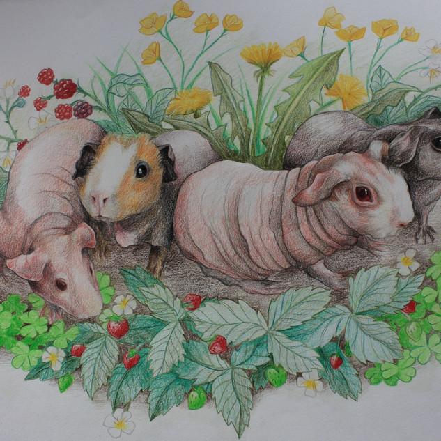 edited pigs.jpg