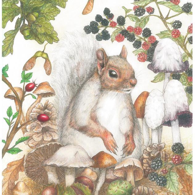 Squirrel Autumn - JPEG.jpg