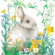 Rabbit Spring - JPEG.jpg