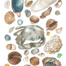 Shells- JPEG.jpg